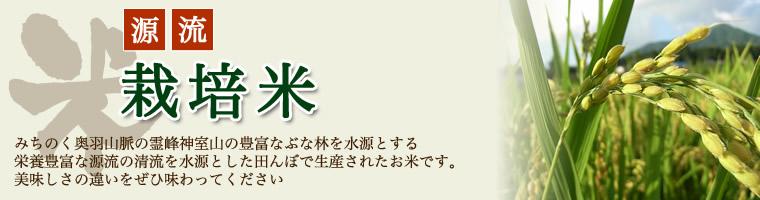 源流栽培米